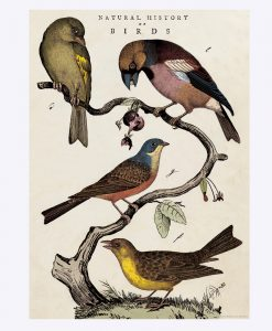 "POSTER – ""BIRDS"""