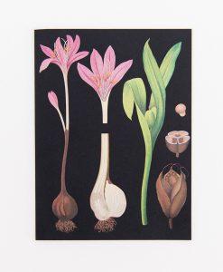 "VYKORT BOTANICAL – ""SPRING FLOWER"""
