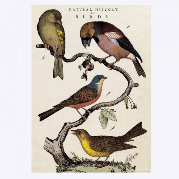 Poster med fåglar Cavallini