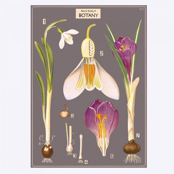 poster med motiv av blomma